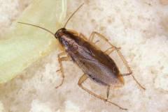Борба с хлебарки Бургас