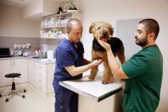 Първичен ветеринарен преглед