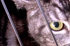 Първичен преглед във ветеринарна клиника