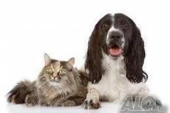 Подстригване и къпане на кучета и котки Пловдив
