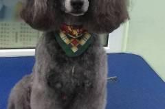 Подстригване на кучета Стара Загора