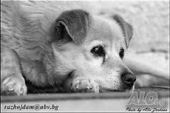 Снимам кучета, София