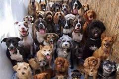 Обучение на всички породи кучета София