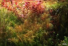 Поддръжка на аквариуми София