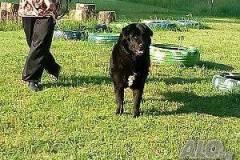 Разхождане на кучета Бургас, Сарафово
