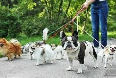 Разхождане на кучета Бургас