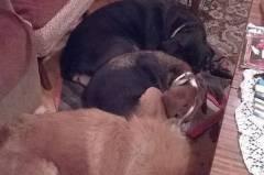 Обучение на кучета  Пловдив