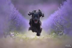 Обучение на кучета Нова Загора
