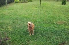 Хотел за кучета Пловдив