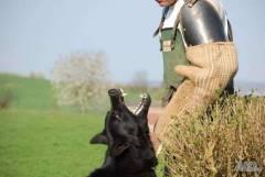 Обучение на кучета от лицензиран инструктор Русе