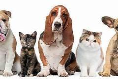 Подстригване на кучета и котки София/Борово
