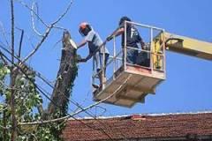 Кастрене и рязане на опасни дървета София