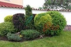 Доставка и засаждане на декоративни растения София