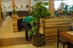 Интериорно озеленяване за хотели София