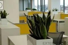 Озеленяване на офиси София